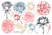 Collection Of Roses - Flowers,...