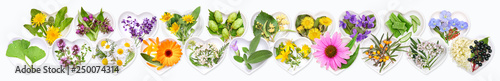 The most important medicinal plants
