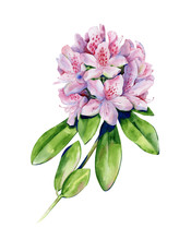 Tropical Rhododendron Flower W...
