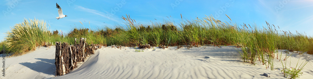 Baltic Sea Beach Dunes with Seagull near Sunset - Panorama