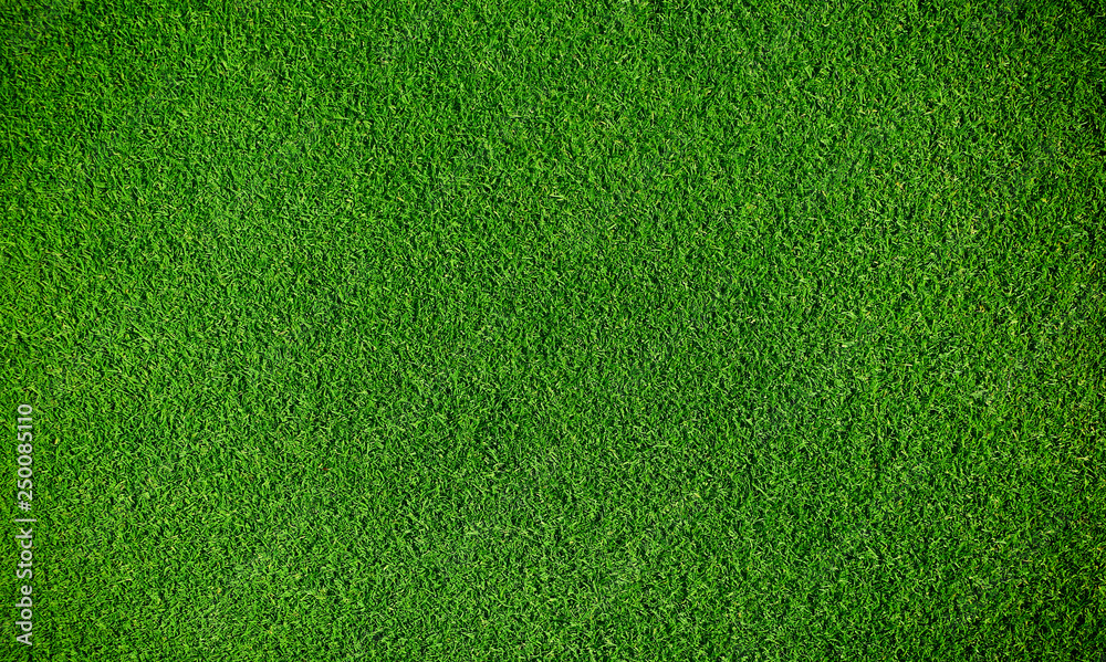 Fototapety, obrazy: Artificial grass background