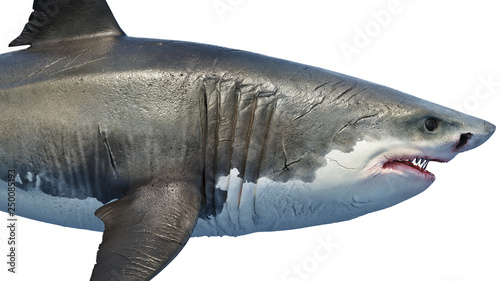 Photo White shark marine predator big, side view, close view