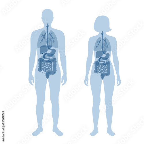 Valokuva human internal organs