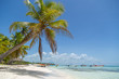 Resort on a white beach and tall palm trees. Beautiful white sandy beach of a luxury resort