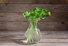 Bunch Of Clover Leaves In Transparent Glass Vase On Wooden Rustic Background