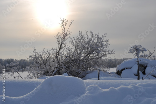 Printed kitchen splashbacks Light blue winter landscape with trees and snow