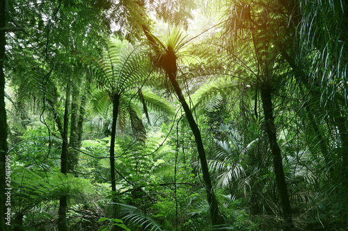 Baldachim z dżungli