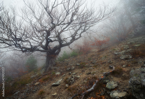 Fototapety, obrazy: Autumn landscape of foggy forest.