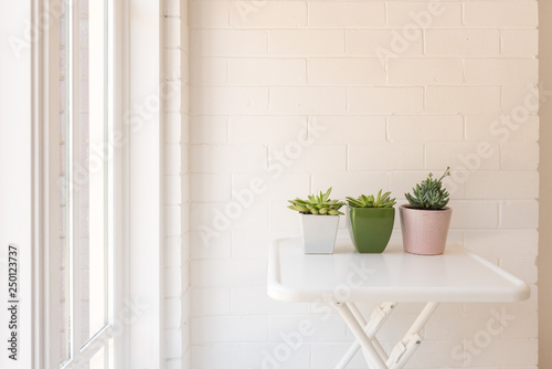 Three Succulent Plants In Coloured Pots On White Table