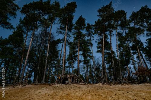 Fototapeta trees at starry night obraz na płótnie