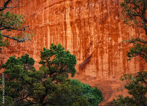 Valokuva  Navajo Sandstone wall in Zion National Park