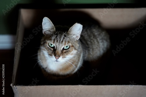Cat sitting in box and looking up to camera with green wall behind it