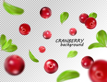 Falling Cranberry Isolated On Transparent Background, Full Depth Of Field. Quality Realistic Vector, 3d Illustration