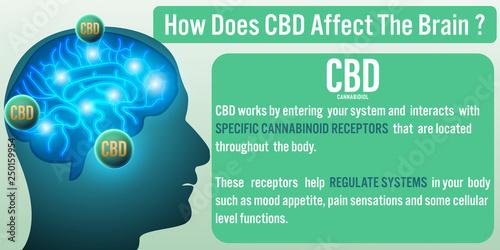 Photo  How Does CBD (Cannabidiol) affect the brain? Vector illustration