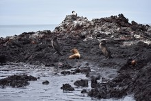 Animals In The Galápagos Islands