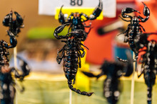 Fried Black Scorpions On Skewers., Street Food Stall In Thailand Selling Deep Fried Insects.