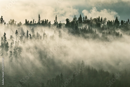 Poster Ochtendstond met mist Foggy mountain ranges covered with spruce forest in the morning mist