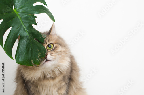 Photo cat eats green leaf plant