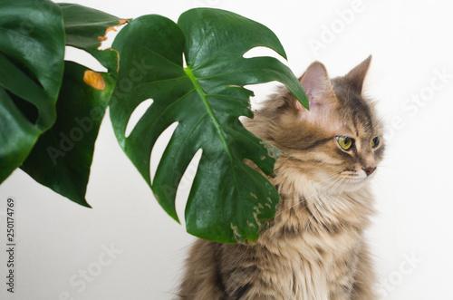 Fotografie, Obraz  cat guilty look, green leaf plant