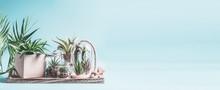 Home Succulent Garden. Green H...