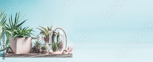 Fototapeta Home succulent garden. Green house plants in pots, glass terrarium and jars on table at pastel pink background. Various succulent and cactus plants in glass bowls. Modern indoor plants concept, banner obraz