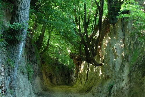 Photo Stands Forest river Kazimierz Dolny