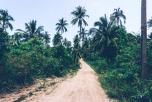 Tropical Jungle. Dirt Road In The Jungle. Thailand, Southeast Asia. Tropical Rainforest. Banana Palm Trees. Landscape View.
