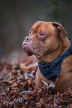 Tierportrait Von Einem Hund