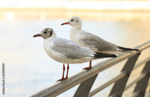 Two seagulls sitting on a metal fence in a big city on a sunny afternoon Canvas Print