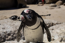 Cuteness Overload: Funny Afric...
