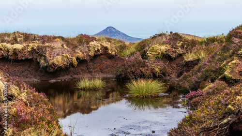 Fotografie, Obraz  Bog marsh, covered with green grass and purple heather and a large puddle created after the rain, reflecting the sky on Tonduff Mountain peak, in Wicklow Mountains, Ireland
