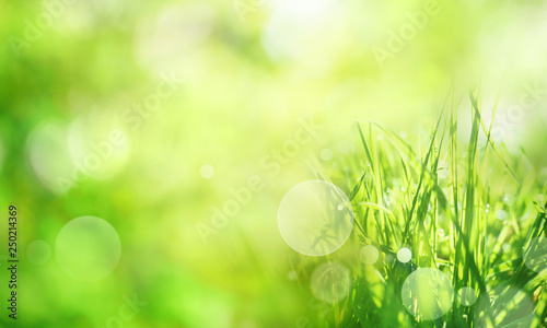 Fotografiet  Sunny green spring background
