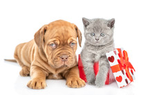 Mastiff Puppy With Kitten Inside Gift Box. Isolated On White Background