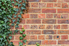 Red Brick Wall With Ivy Vines Background