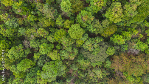 Valokuva  Aerial top view forest, Natural park background