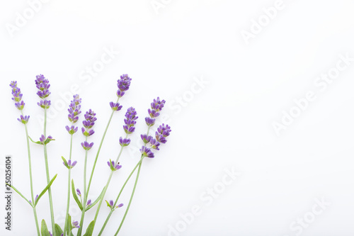 Autocollant pour porte Lavande lavender on white background