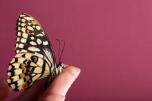 Beautiful Butterfly Sitting On Female Hand Against Color Background