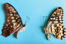Beautiful Tropical Butterflies On Color Background