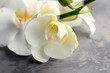 Beautiful orchid flowers on grey background, closeup