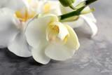 Fototapeta Storczyk - Beautiful orchid flowers on grey background, closeup