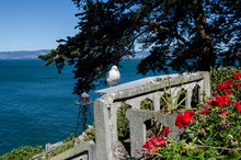 A Western Gull (Seagull) Sits Perched On A Concrete Ledge Of Ruins In Alcatraz Island On A Sunny Day