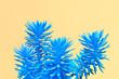 Leinwanddruck Bild - Fashion Neon tropical aloe in Blue Color. Minimal Trendy stillife on yellow Design background. Art concept