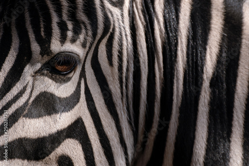 Aluminium Prints Zebra Ojo de cebra