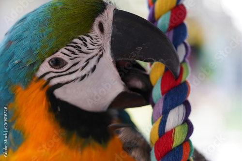 Photo Stands Parrot Parrot Parot Macaw Maccaw Pappegaai Papegaai