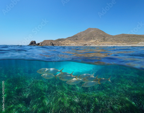 Spain arid coast with fish and seagrass underwater, Mediterranean sea, Cabo de Gata Nijar, Almeria, Andalusia, split view half over and under water