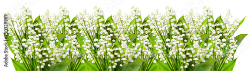 Poster Muguet de mai Lily of the valley isolated on white background