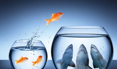 Shark Trap - Business Risk ...