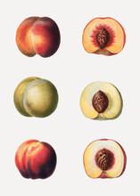 Peaches In A Row
