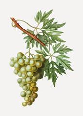 Panel Szklany Do jadalni Green grape cluster