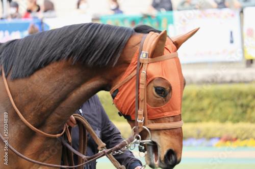 Fototapeta 競走馬、クローズアップ obraz